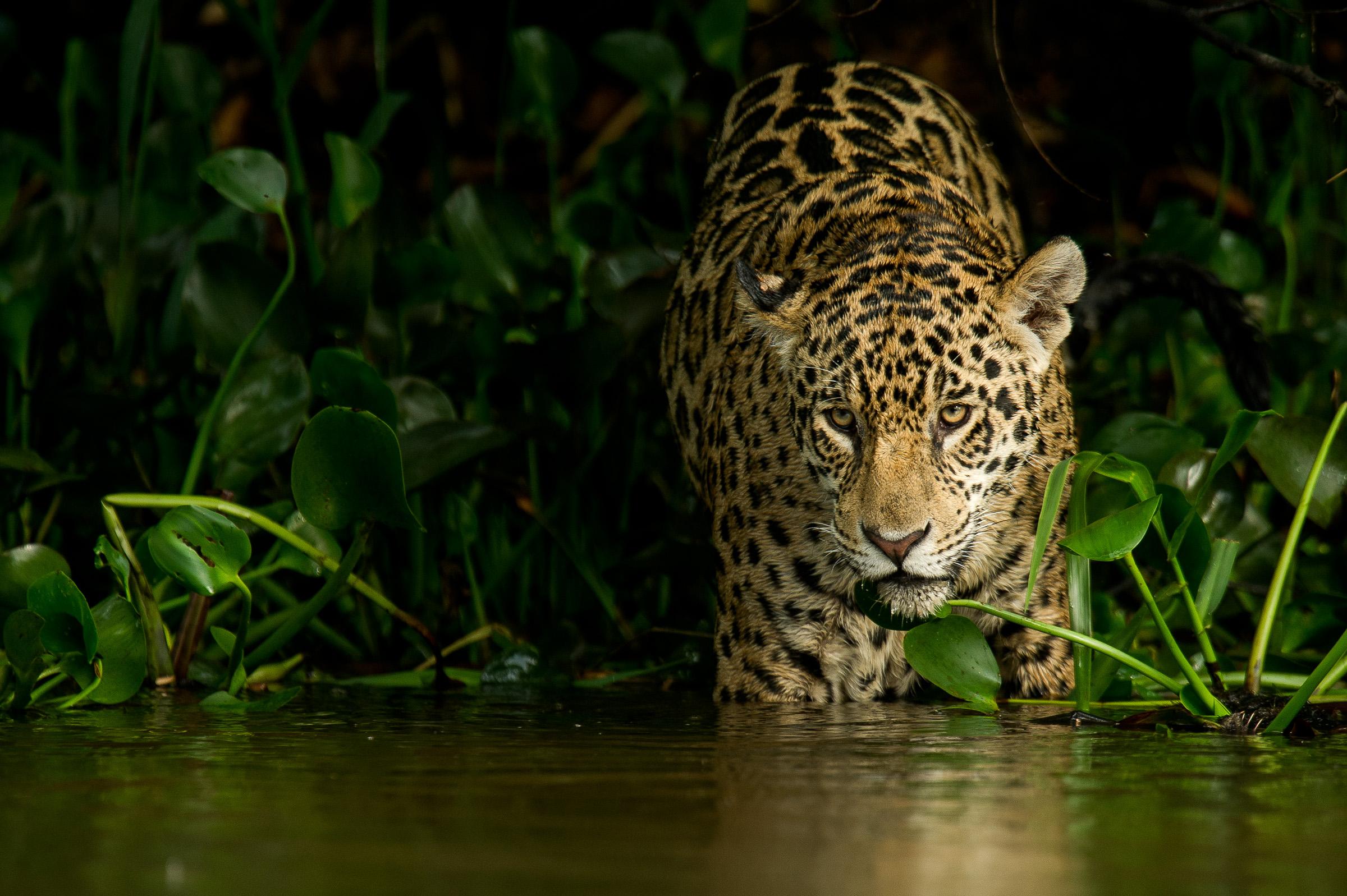 2013-10-17 Pantanal_Brasilien-6599-Edit